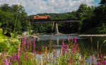 BKRR 4116 and purple loosestrife on the Hoosick River